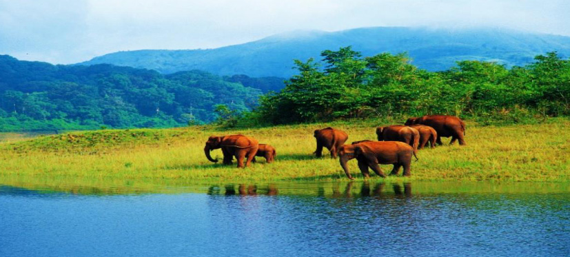 Kerala Wildlife Tour Package 4 Nights/ 5days, Munnar - Thekkady