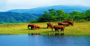 Kerala Wildlife Tour Package 4 Nights/ 5days, Munnar - Thekkady