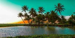 Comfort Kerala Tour 07 Night 08days, Cherai - Athirapilly -Munnar -thekkady - Kumarakom - Alappuzha