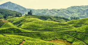 Leisure kerala package 04 Nights 05Days, Cochin-Munnar-Thekkady